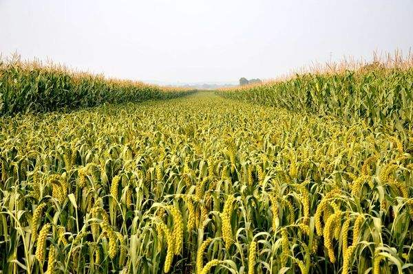 山西將分區推廣有機旱作農業機械化