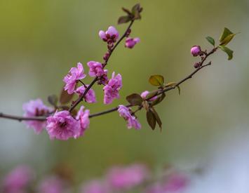 晉城:萬紫千紅總是春