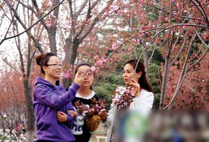 晉城:櫻花爛漫時