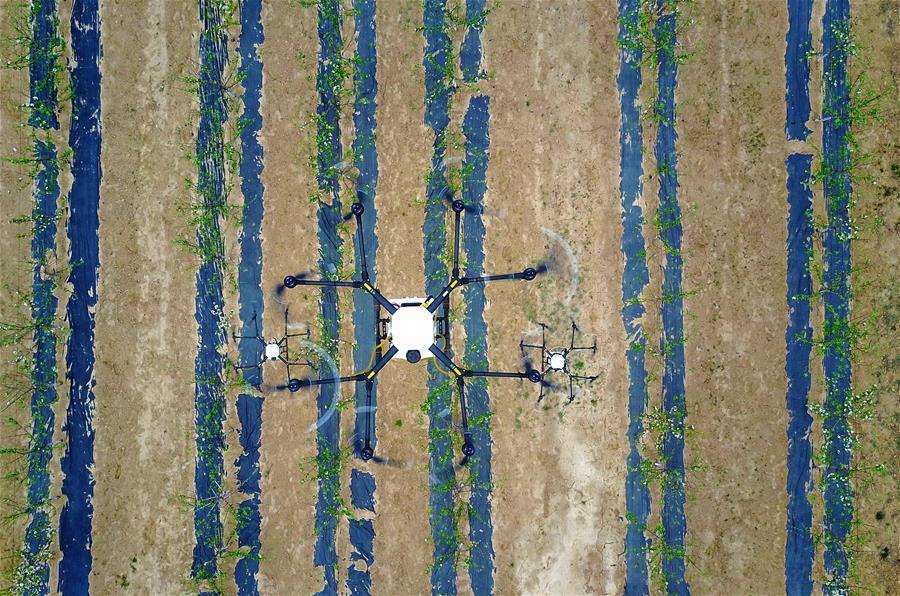 山西臨汾:無人機植保獲大面積應用