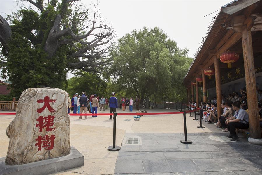 洪洞大槐樹:延續600年的鄉愁