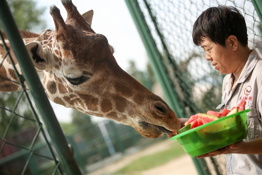 山西太原:動物防暑