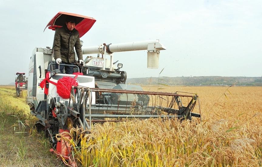 臨猗縣首次成功試種水稻