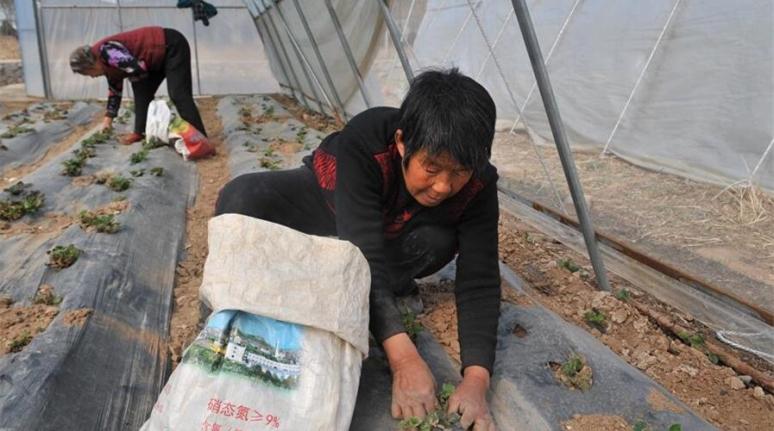 平順合作經營助農增收