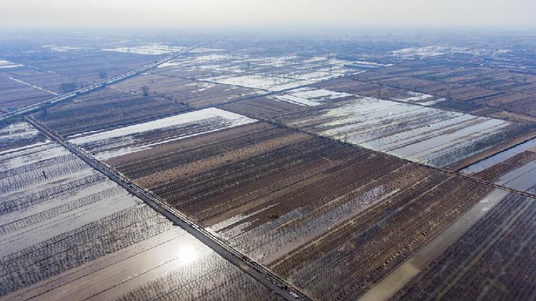 汾河灌区灌溉进入高峰