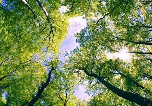 山西生態環境呈明顯轉好趨勢 植被生態質量改善全國最快