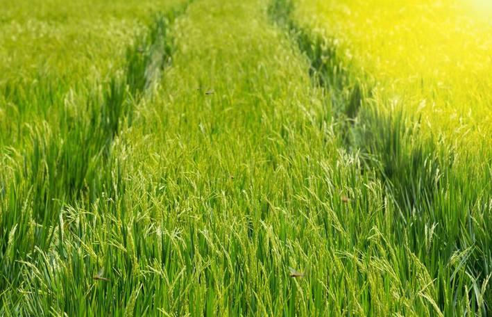 一个山西农业大县的升级之路