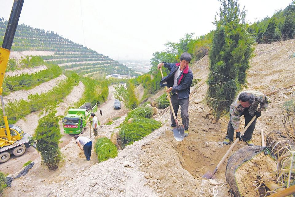 太山片区绿化改造