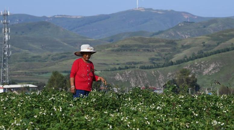 山西嵐縣:小土豆種出大産業