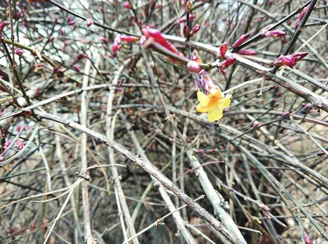 春天已來,賞花健身你準備好了嗎?