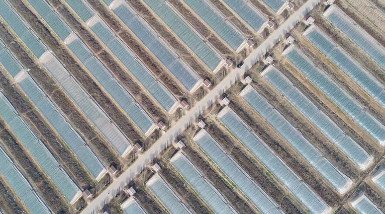 山西稷山:設施農業助增收
