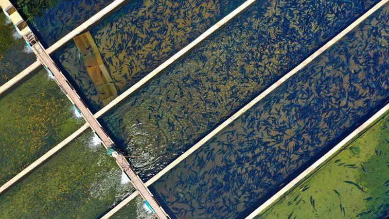 水産養殖促農增收