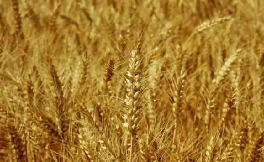萬榮現代農業産業示范區獲省政府批復