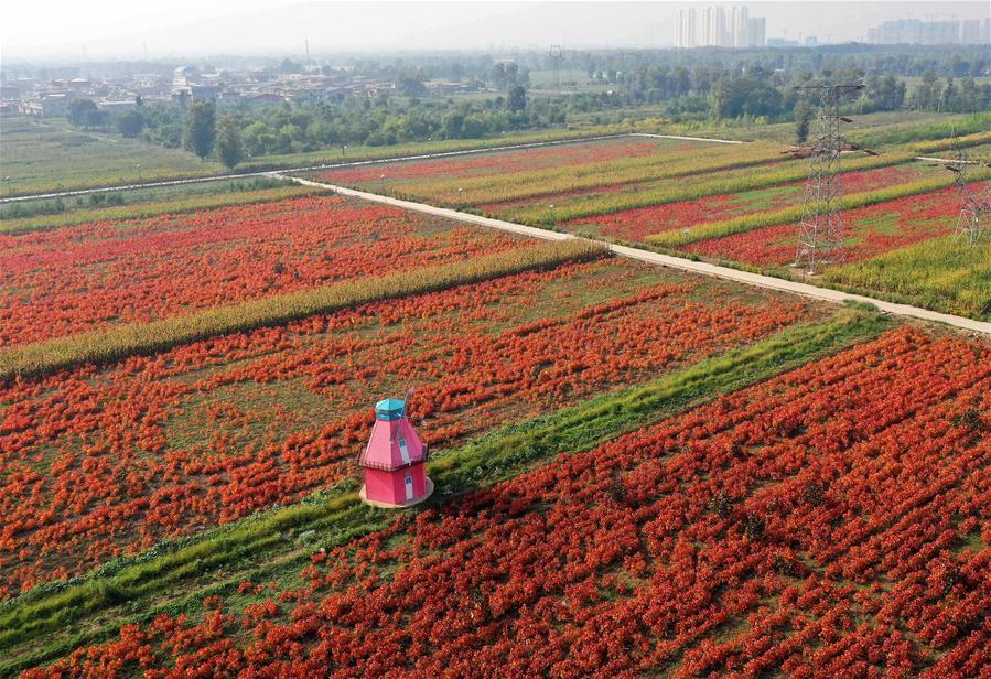 山西太原:花卉産業助增收