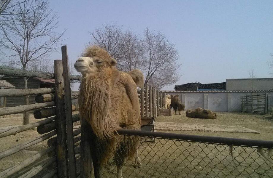 """網傳""""免費送太原動物園家庭套票""""?這是虛假信息"""
