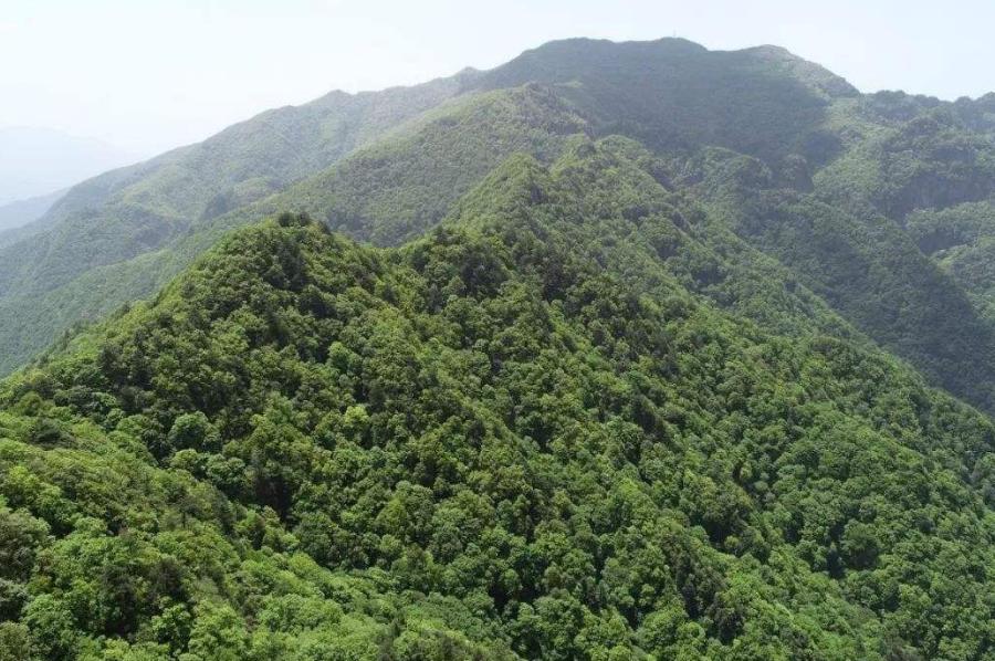 歷山混溝原始森林第二次綜合科考成果發布