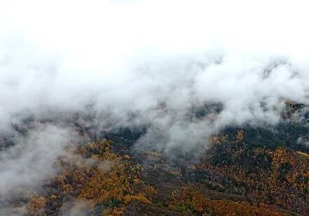 山西發布大霧黃色預警 可能出現能見度小于500米的霧