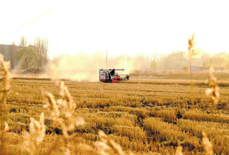 山西秋收秋種基本結束 已收獲約3780萬畝秋糧