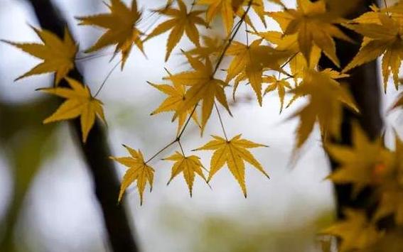 """11月10日起 山西大風降溫降水一起""""上陣"""""""