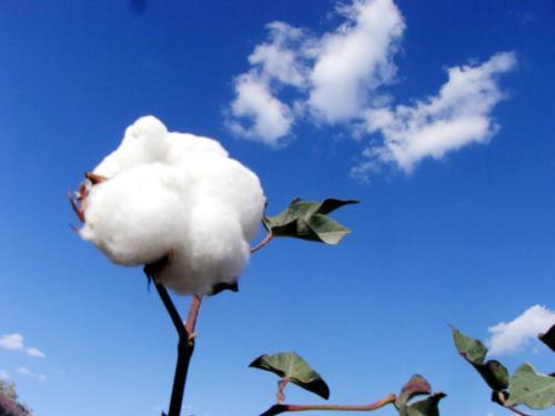 山西省擬推薦5家企業申報農産品進口關稅配額