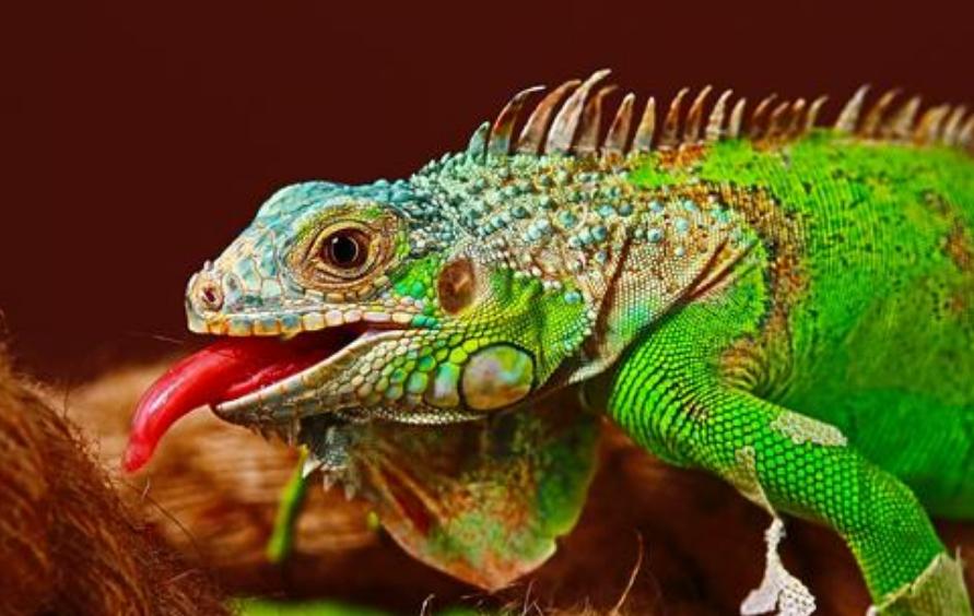 太原海關破獲一起走私珍貴動物案 涉案動物173只