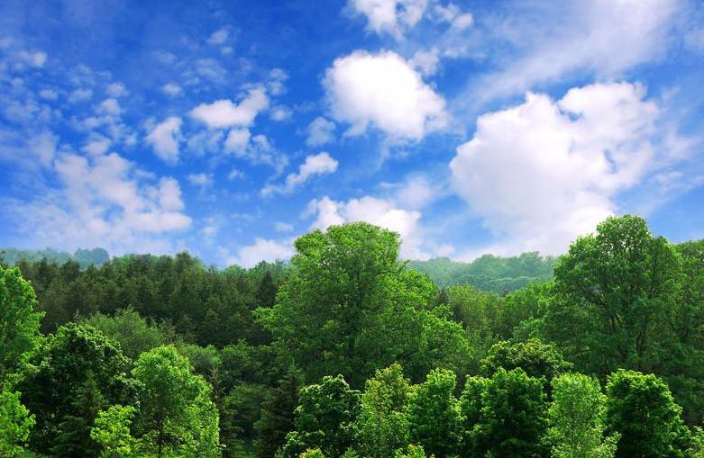 山西啟動造林碳匯開發試點