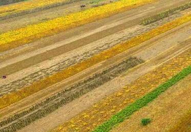 《山西省土壤污染防治條例》將于2020年1月1日起施行