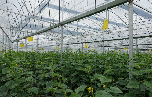 太谷現代農業産業園被認定為國家現代農業産業園