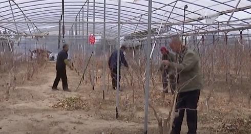 柳林縣:春耕春種搶農時