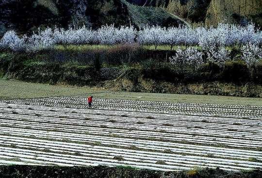 農行山西分行精準高效支持復工復産春耕備耕