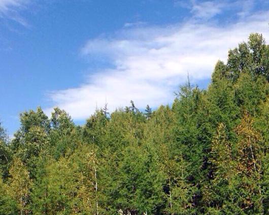 山西省林草局專項行動打擊破壞森林草原資源違法行為