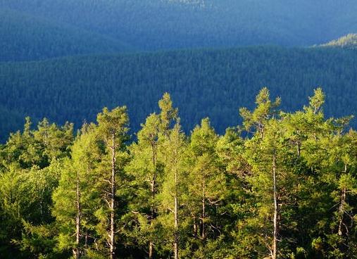 山西省公安廳部署清明節期間森林火災防范工作