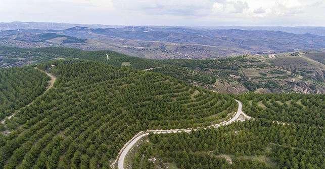 山西省春季植樹造林完成119萬畝