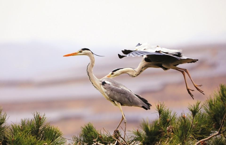 生態方山 候鳥天堂