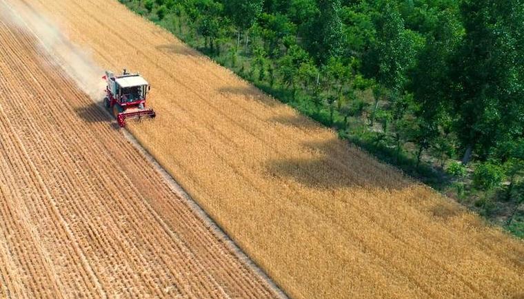 山西運城:400余萬畝冬小麥開始收獲