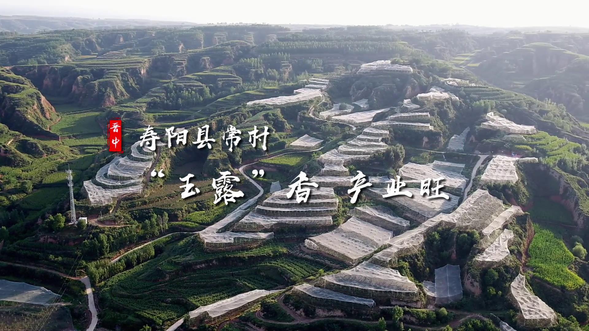 """壽陽縣常村:""""玉露""""香 産業旺"""