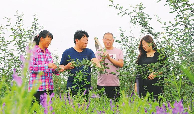 特色種植促增收