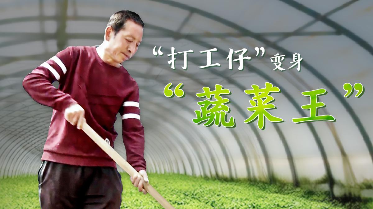 """【脫貧印記】""""打工仔""""變身""""蔬菜王"""""""