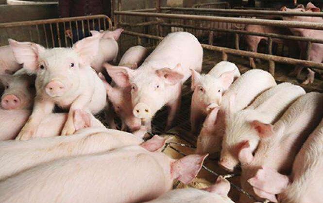 山西指定13個運輸動物及動物産品入晉道口