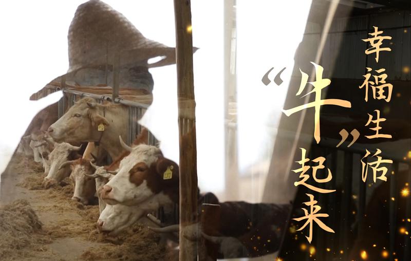 """【脫貧印記】幸福生活""""牛""""起來"""