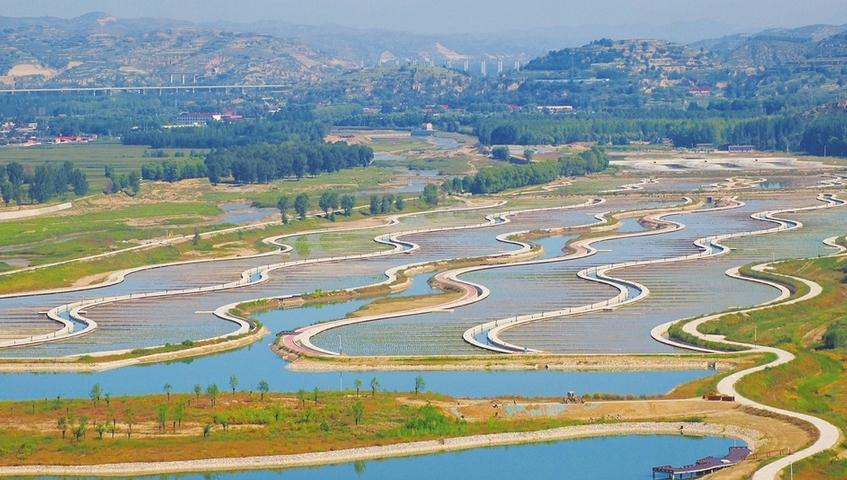 人工濕地 改善水質