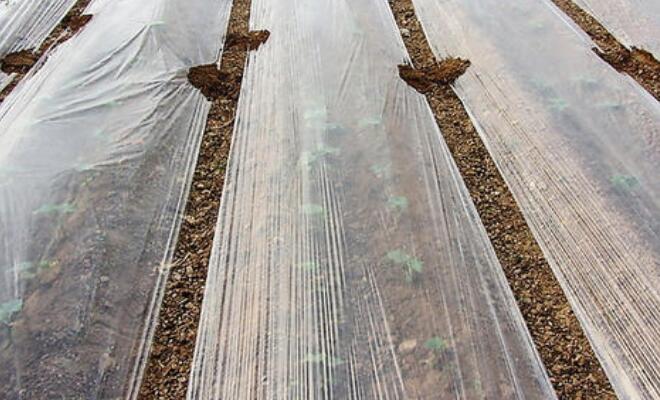 山西省市場監管局專項抽查106批次農用薄膜 8批次沒過關
