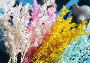 山西農谷首批永生幹花産品上市