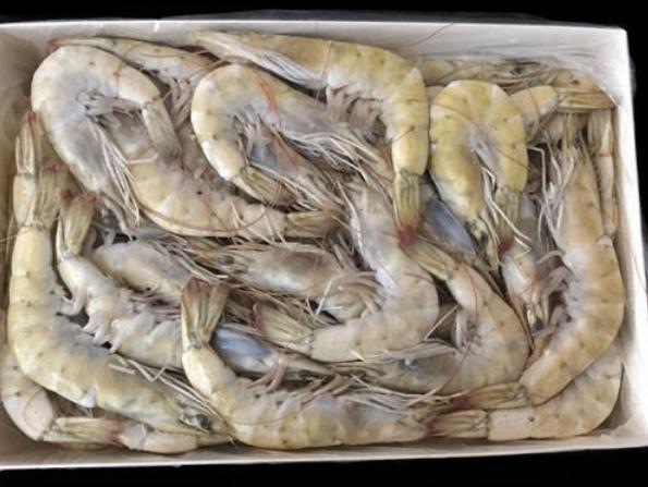 山西霍州進口冷凍厄瓜多爾青蝦外包裝檢出一份陽性