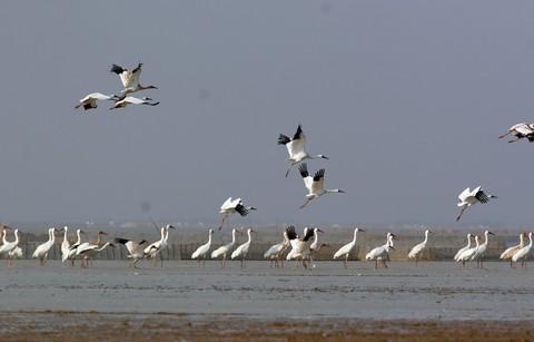 山西下發通知 防范今冬明春候鳥高致病性禽流感疫情