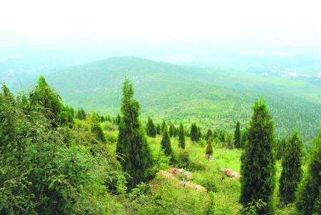 山西不懈造林森林覆蓋率提高至23.18%