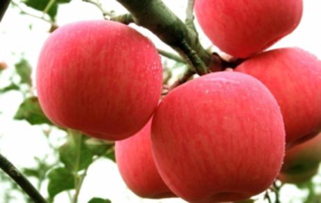 山西水果出口國家和地區已增至73個