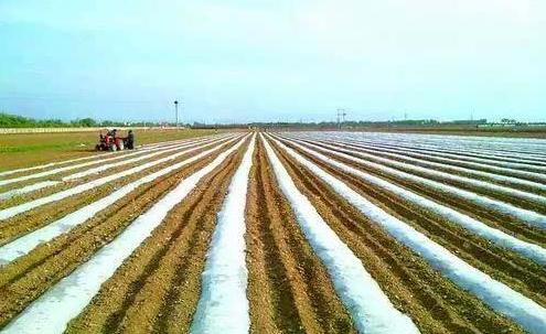 山西十大工程助力有機旱作農業標準體係構建