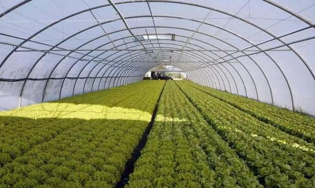 2021年,山西設施農業如何發展?