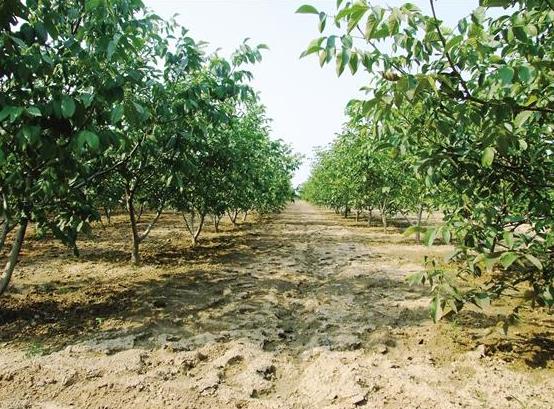山西確定60處幹果經濟林示范園